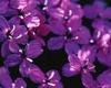 Блог : Красивое : Просто красивые цветочки.