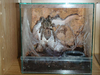 Когда выбираете террариум для пауков необходимо придерживаться.
